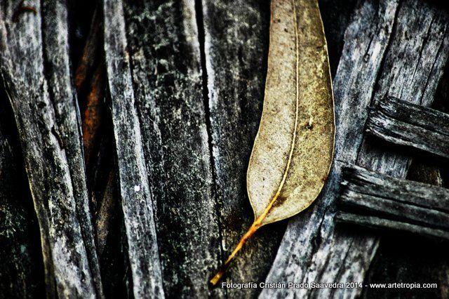 Eucaliptus bark 01 By Chilean Photographer Cristián Prado Saavedra - www.artetropia.com by #Cristian_Prado_S