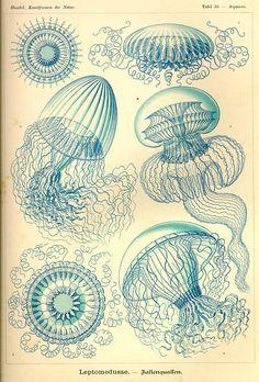 Ernst Haeckel:  Kunstformen der Natur  1899-1904