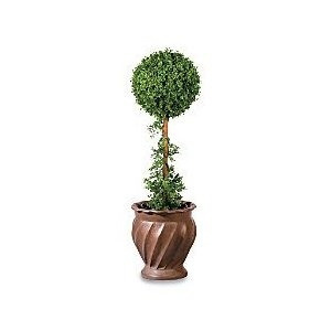 you want to buy Boxwood Ball Artificial Topiary Tree – Improvements,yes ..! you comes at the right place. you can get special discount for Boxwood Ball Artificial Topiary Tree – Improvements in here.You can choose to buy a product and Boxwood Ball Artificial Topiary Tree – Improvements at the Best Price Online with Secure Transaction in here…  http://artificial-topiary.com/boxwood-ball-artificial-topiary-tree-improvements-reviews.html