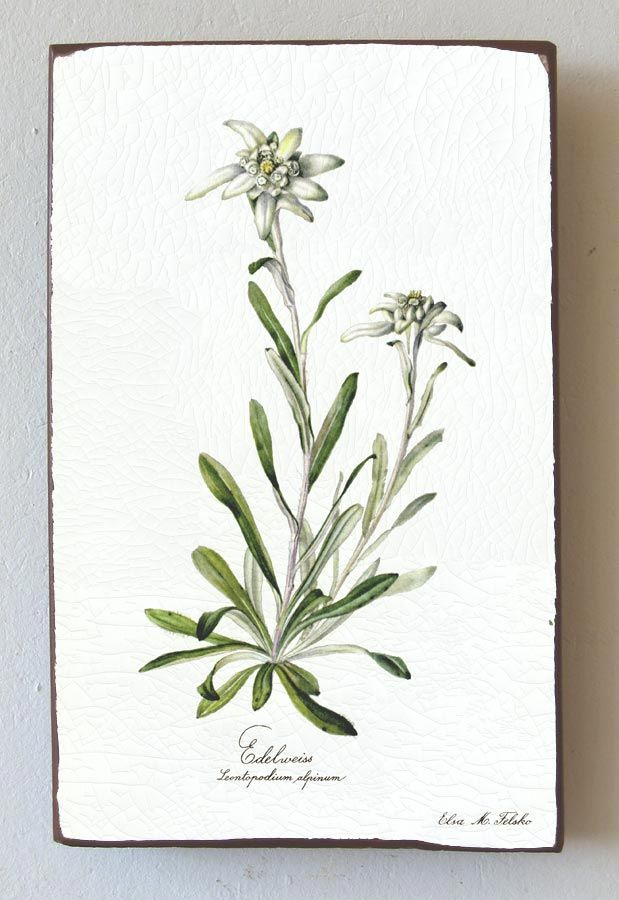 need this for my house. Edelweiss will always remind me of my Nana.