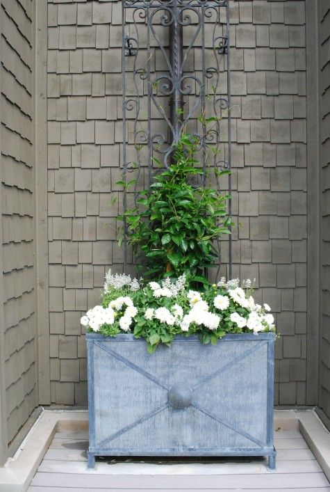 box w its own antique scrolled iron panel is very friendly to a mandevillea planting.  The niche is warm, & protected from wind.  The vine will have plenty of places to wind around, & grow.  It will climb to the top of this panel in no time.  The placement was somewhat dictated by a giant downspout right in the middle of the wall.  But as this balcony does not get any use in the winter,  the container helps to solve a visual problem.
