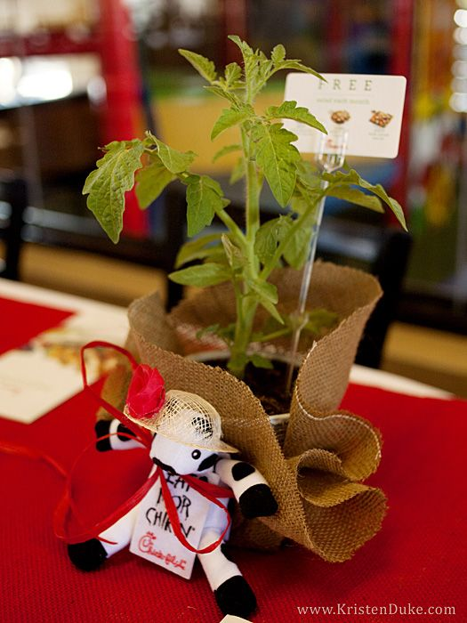 Each of us left with a Tomato plant, mini cow (with garden hat), and a gift card to receive each salad once over the summer months.