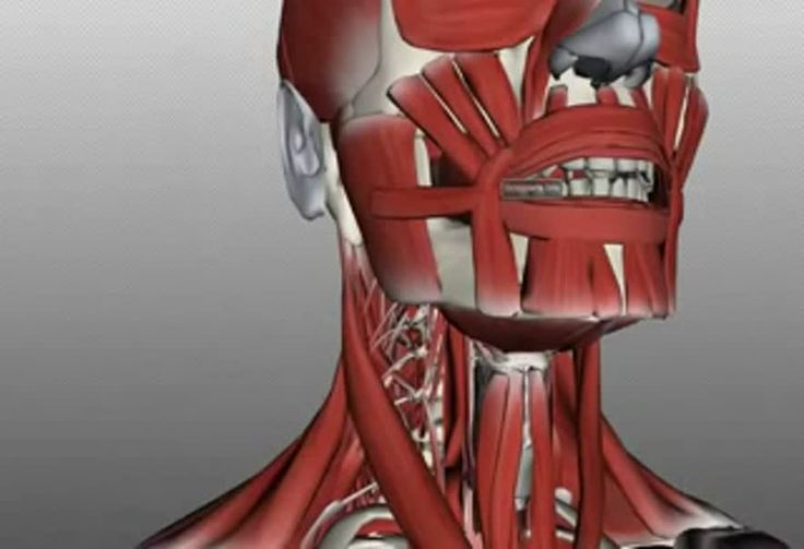 Medical video: Tongue Muscles and the Hyoid Bone