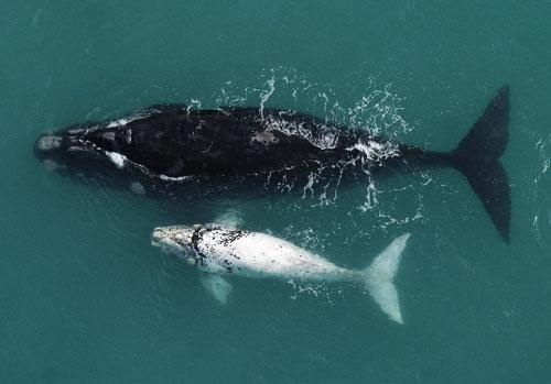 Beautiful Whales along the beautiful South African coastline