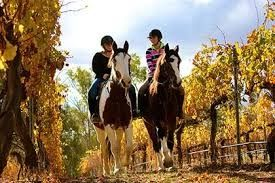 Go on a horseback tour through a winery