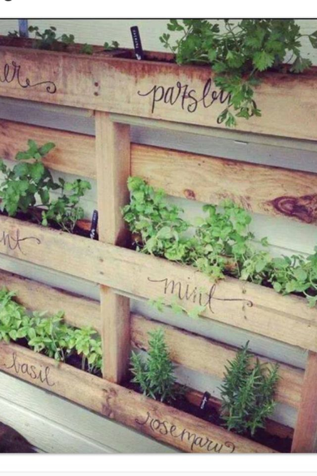 Vertical herb garden.                                                       …