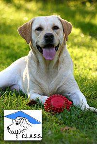 Basic Dog Training Classes | Puppy Training & Socialization