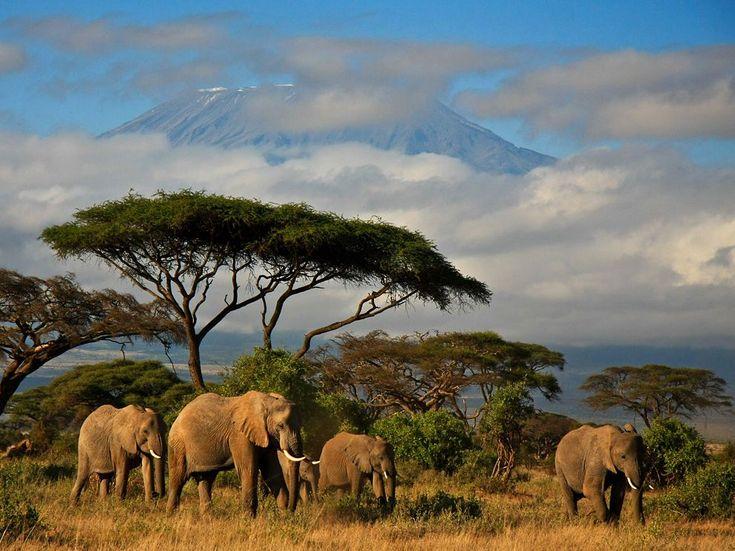 Kenya: Kenya Safari, Blue Sky, Animal Photography, Africans Safari, National Geographic, Elephant, National Parks, Cloud, Mount Kilimanjaro