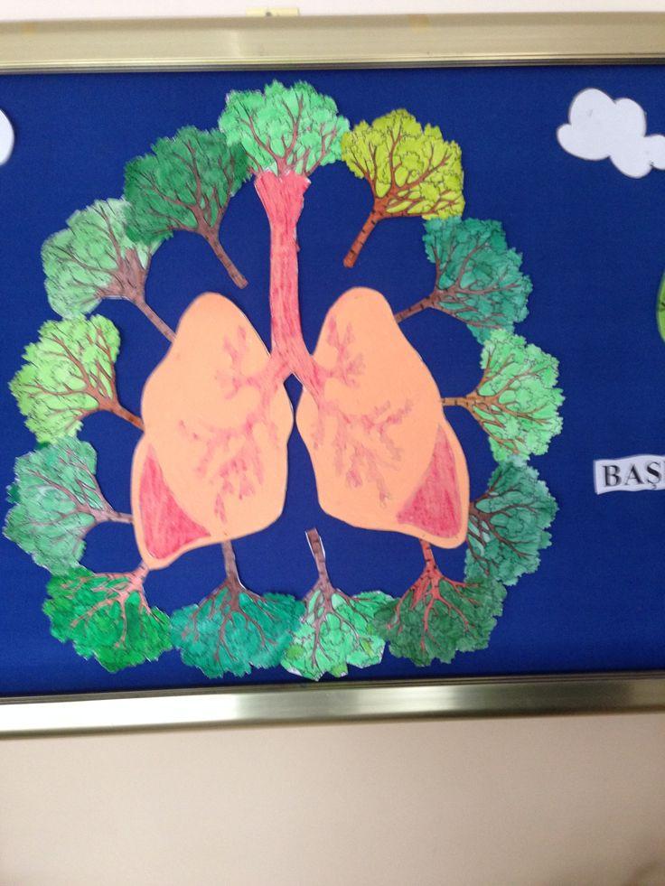 Sigara içmeyenlerin akciğerleri