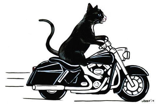 Pin On Harley Davidson Fatboy