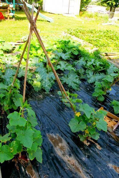 5 Easy Diy Cucumber Trellis Ideas The Free Range Life 400 x 300