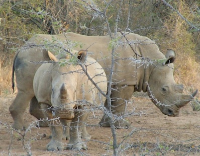 Thabazimbi Game Reserve. Where I experienced my first close encounter with an rhino.