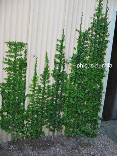 Fotos de jardines y plantas de sombra infojardin - Plantas trepadoras para muros ...