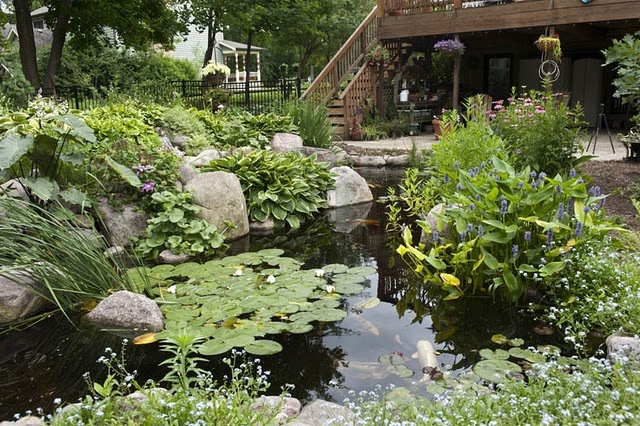 .The Ponds, Water Gardens, Water Features, Ponds Close, Koi Ponds, Better Opportunity, Gardens Water, Dreams Ponds, Fish Ponds