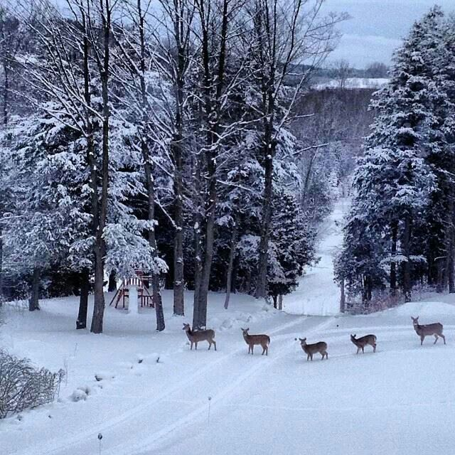Beautiful christmas scenes nature wallpaper desktop - Christmas nature wallpaper ...