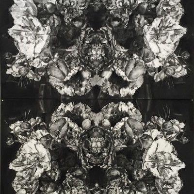 Amy Dynan, Poppies - Stillness in Movement, Charcoal on Paper, 150 x 106cm (each), $6,450 each  www,stanleystreetgallery.com.au