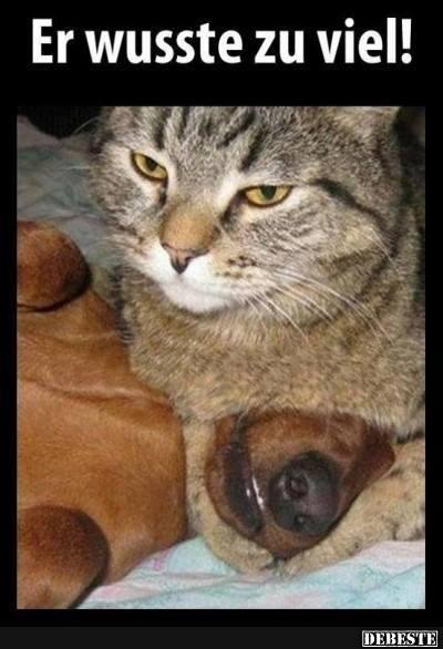 pin von simone hierlemann auf catastic urkomische tiere katzen witze und lustige tierfotos