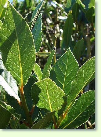 88 besten Pflanzen Bilder auf Pinterest Garten, Gärten und Alter - tipps pflege pflanzen wintergarten