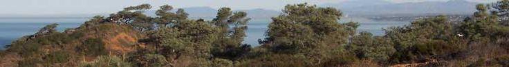Torrey Pines State Reserve-San Diego, CA