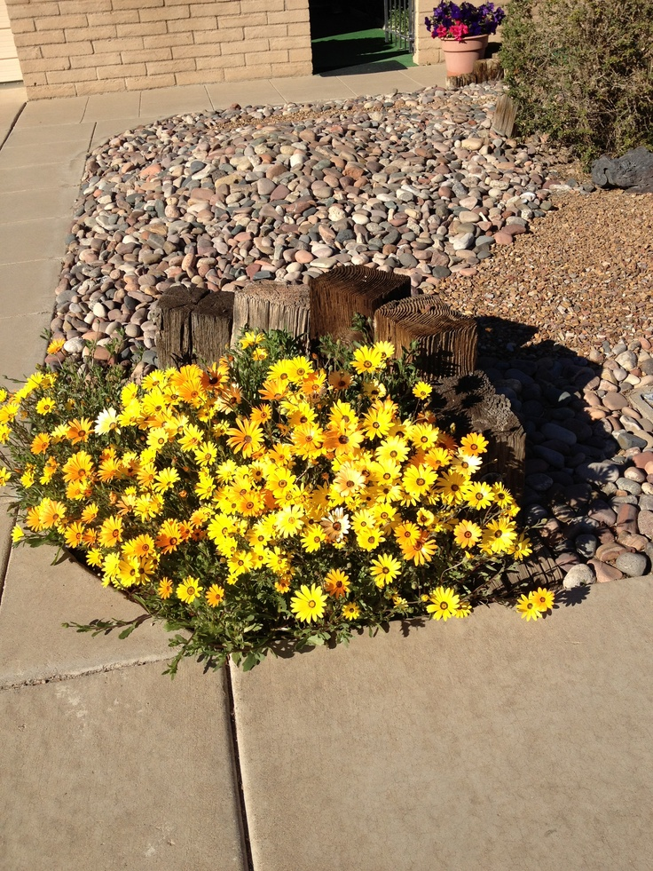 landscaping plants tucson just love outdoor ideas arizona deserts