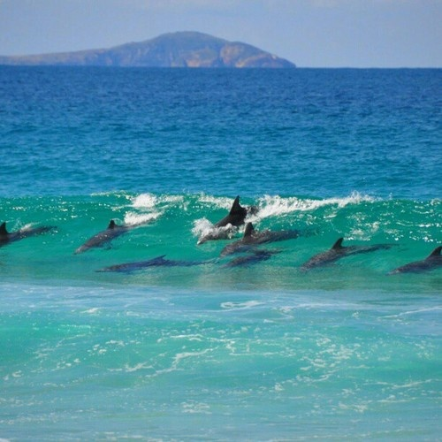 Dolphins at Bennetts Beach, Hawks Nest / Port Stephens on NSW's Mid-North Coast