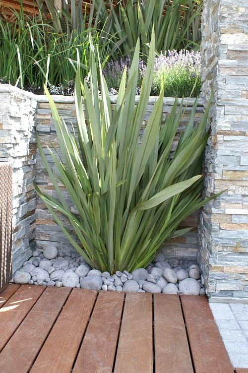 newzealand phormium (flax)  For that space between the stairs and the laundry room!