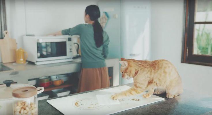 おそうじするネコ!? 優しいネコに思わず心を奪われるCM | AdGang