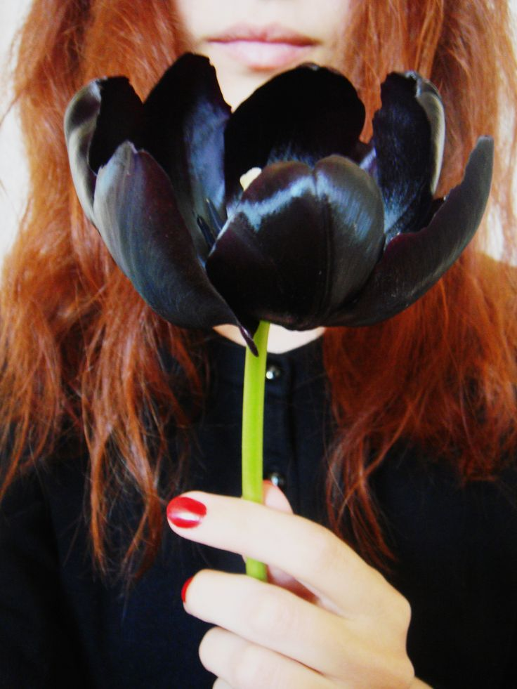 black Tulip and me :-)