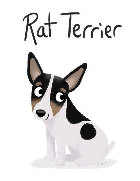 774 best rat terriers i love them  images on pinterest