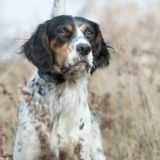 10  Mistakes in Gun Dog Training and How Not to Make Them - Part 1