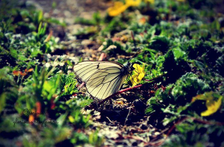 """Долго """"охотилась"""" за этой бабочкой #butterfly #macro #nature #бабочка #Пермь"""