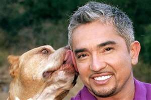 The Dog Whisperer - Ceasar Millan and his pit Daddy!! Such a good dog :)