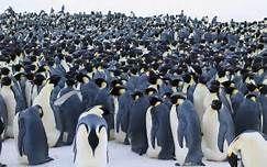 Resultados de la búsqueda de imágenes: comunidad de pinguinos - - Yahoo Search