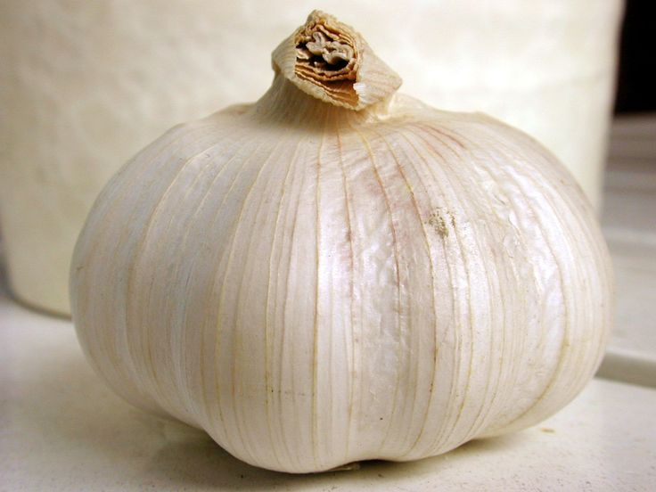 garlic | Herbal Extract Company's Garlic Supplement Pictures