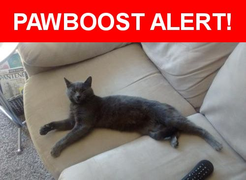 Please spread the word! Grey Joy was last seen in Renton, WA 98059.    Nearest Address: Near NE 4th St & 142nd Ave SE