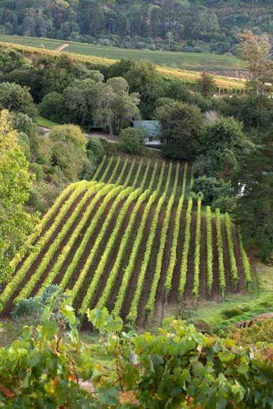 Eagles Nest Wines - Constantia - Cape Town