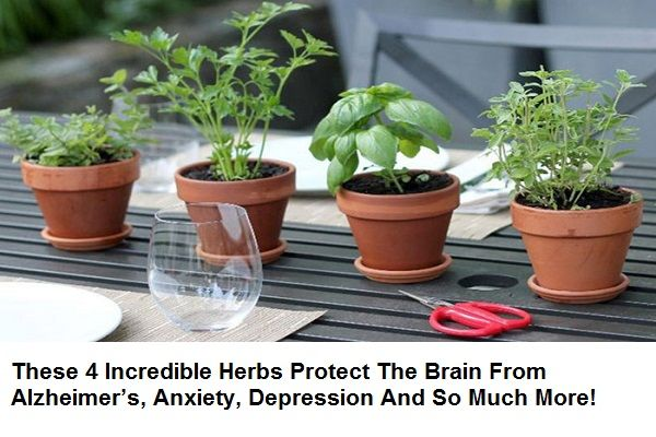 Herbs and plants are beginning to receive a ton of recognition these days as they are constantly used as a part of