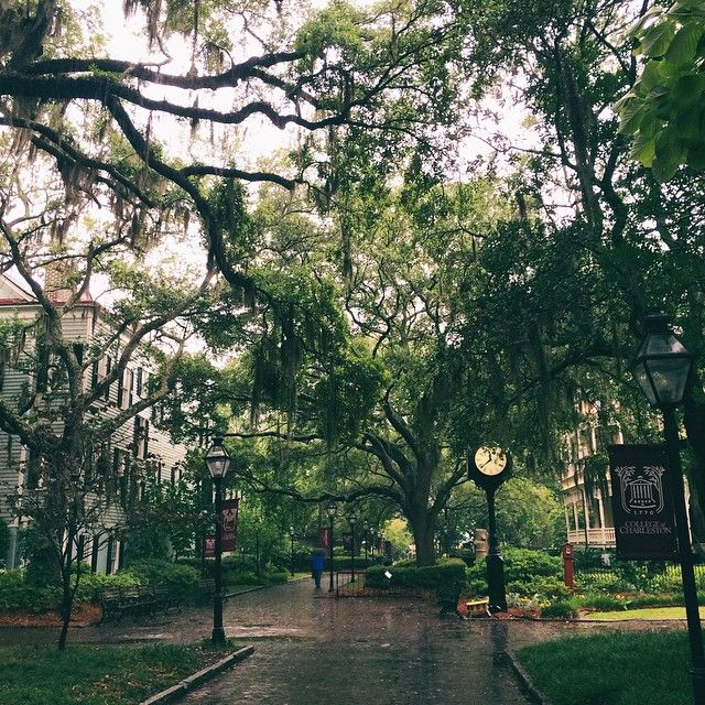 aurora-rain:  the college of charleston campus is probably the most beautiful thing I have ever in my life seen. (at College of Charleston)