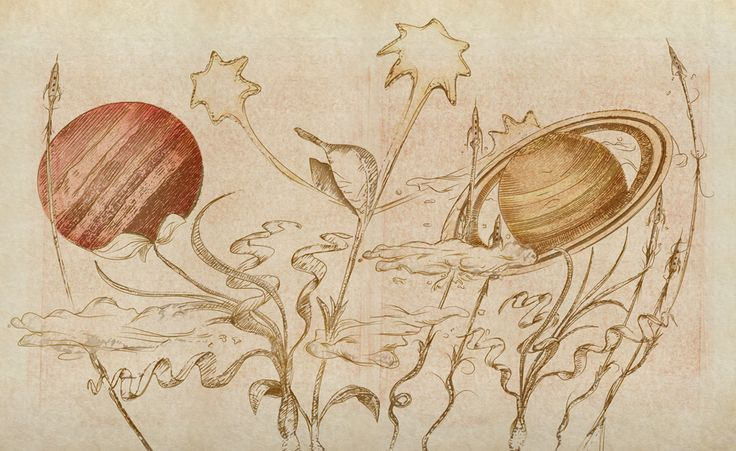 Plants & PIanets illustration pencil