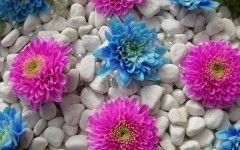 Wallpaper Bunga Cantik Bisa Buat DP BBM – flo0125
