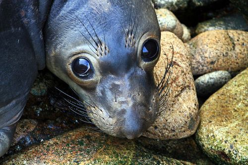 Cute Marine Animals