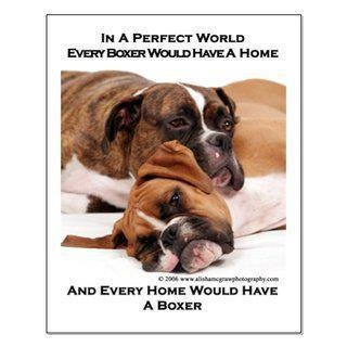 boxers!: Boxers Stuff, Boxers Puppies, Absolutely True, Boxers Baby, Boxers Dogs,  St. Bernard, Boxers Rules, White Boxers, Boxers Life