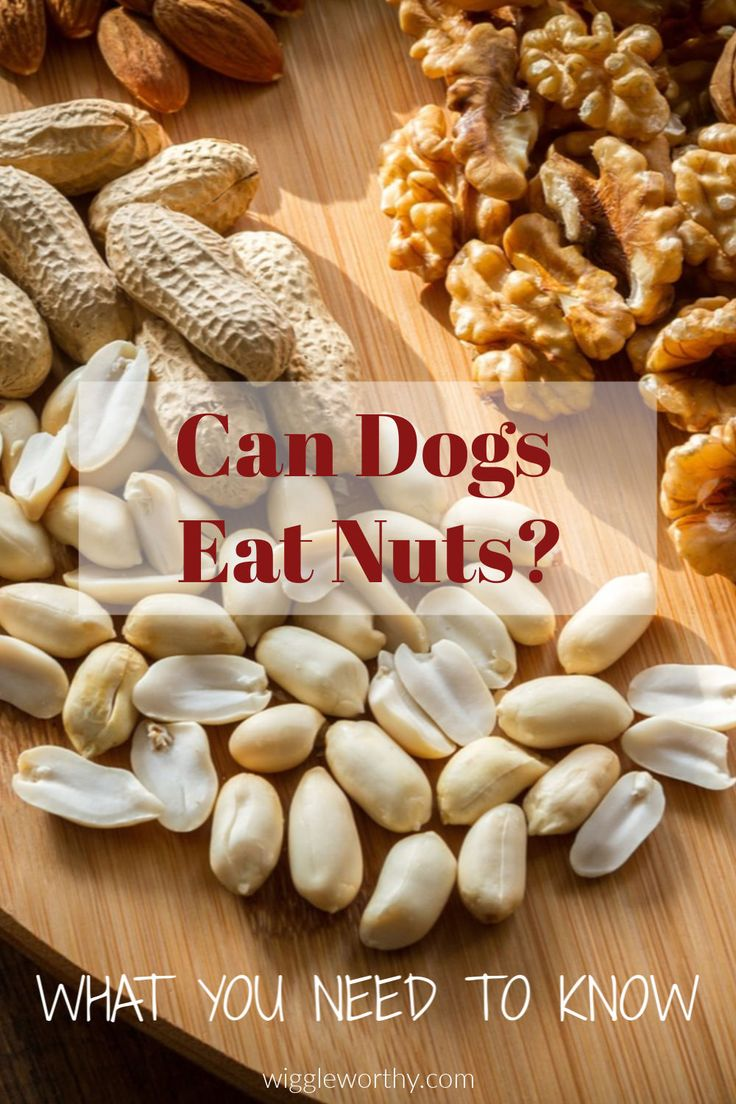 Can Dogs Eat Nuts? What You Need To Know in 2020 Can