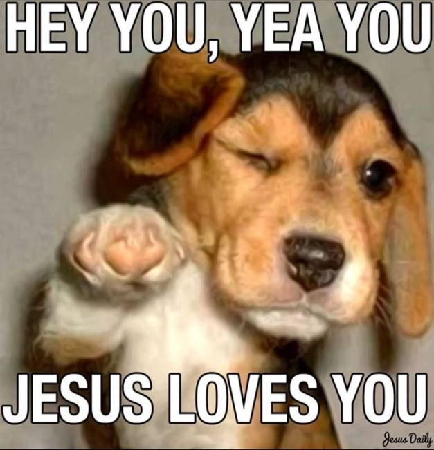 Pin By Eciugjarymc On Favorite Quotes Funny Dog Memes Dog Memes Cheer Up Funny