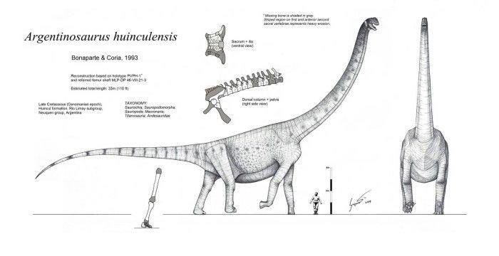 Dinosaur Coloring Pages Dinosaur Silhouette Dinosaur Coloring