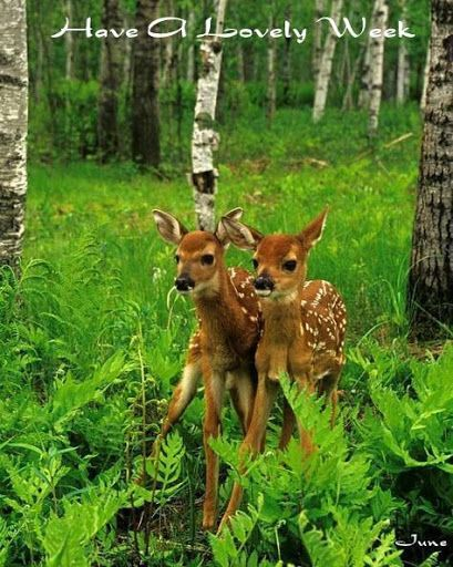 https://i.pinimg.com/736x/9d/24/5e/9d245e27be4ef10116f7e0e19bd88977--new-week-animal-kingdom.jpg