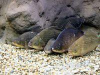 Artig eingereiht: die Fische im Besucherzentrum Bodorka in Balatonfüred.