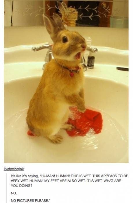 I thought the bunny got their period but realized it was a washcloth