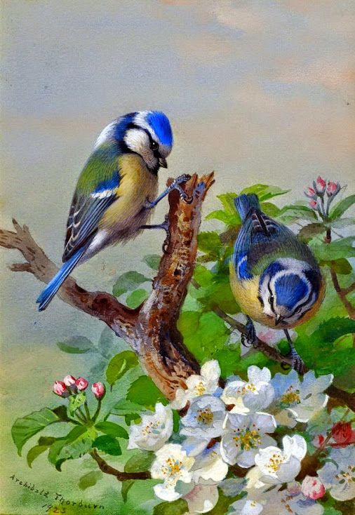 Blue tits (1923) • watercolor: Archibald Thorburn