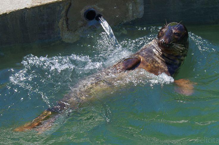 Тюлени сегодня прилетели из Калиниграда в Крым, Тайган